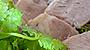 ケフィアで作る発酵塩豚